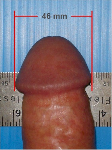 TLC Tugger flaccid and erect size examples